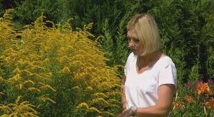 Kobiecy ogród pełen kwiatów (odc. 614)